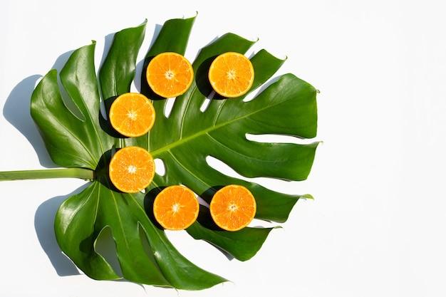 높은 비타민 c, 수분이 많고 달콤합니다. monstera 식물 잎을 가진 신선한 오렌지 과일입니다.