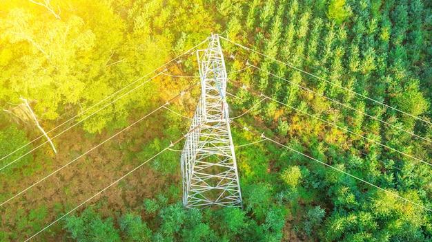 나무 사이의 고압전철탑, 송전탑