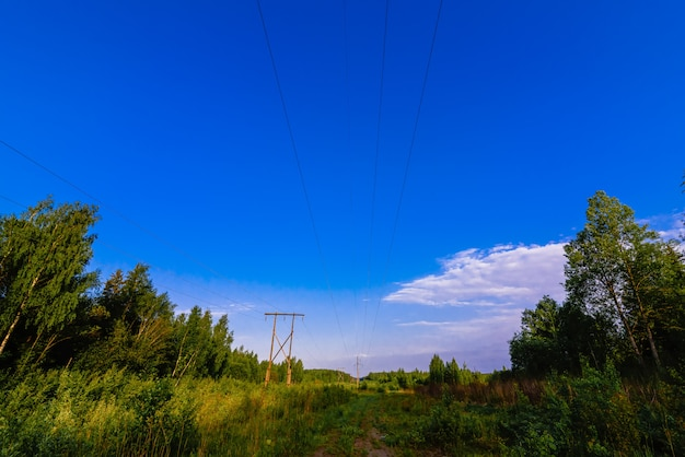 High voltage power line in the forest on a summer day