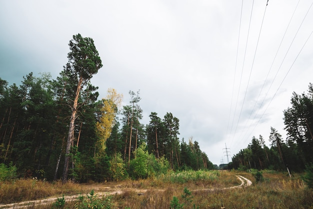 High voltage power lines in glade along conifer trees under cloudy sky. poles with wires along dirt road near tall pine. electricity towers in coniferous forest with copy space.