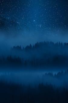 안개에있는 고원 숲, 안개가 자욱한 숲 위의 하늘에 별이있는 밤 풍경