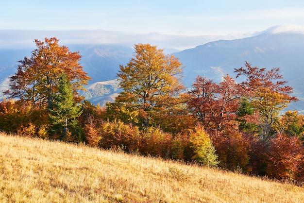 高原の植生は穏やかな夏で、異常に美しい色が秋に咲きます
