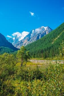Highland vegetation near mountain creek before beautiful glacier