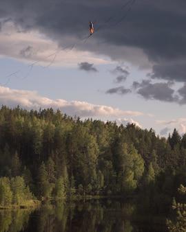 絵のように美しい森の湖の上のハイライン