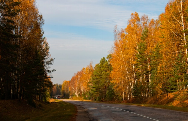 Highway in the fall. asphalt road on a background of autumn forest