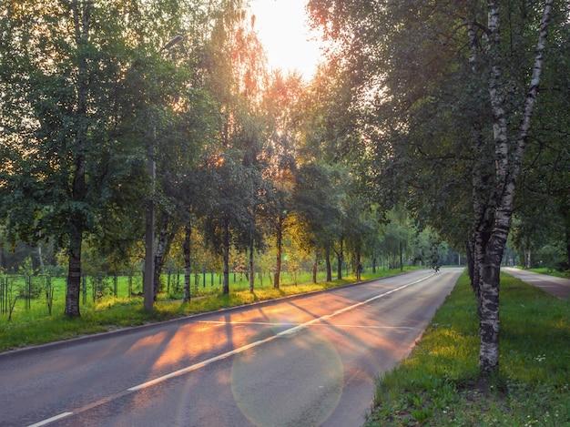Шоссе с деревьями на обочине и вечерним солнцем.