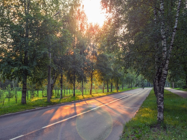 Highway with trees on the side and the evening sun.