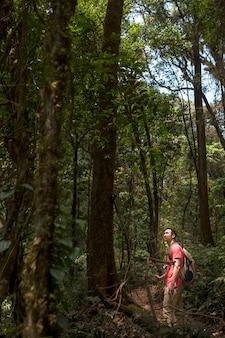 Escursionista guardando albero alto