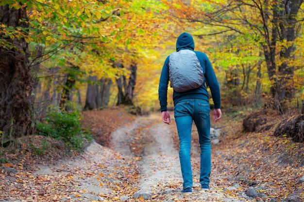 Путешественник, наблюдающий за зеленой долиной