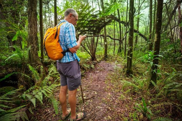 緑のジャングル、ハワイ、アメリカのトレイルのハイカー
