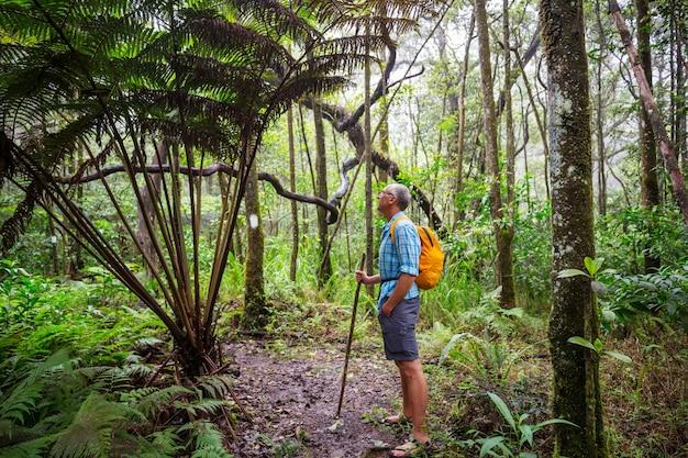 Путешественник по тропе в зеленых джунглях, гавайи, сша