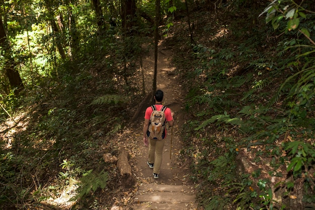 Escursionista sul sentiero nel bosco backview