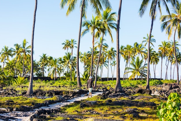 Hiker on the trail in palm plantation, hawaii, usa