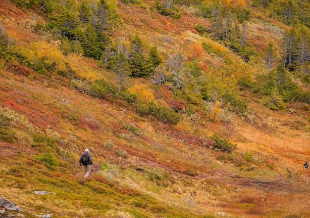 Viandante che cammina attraverso un campo arancione brillante con alberi