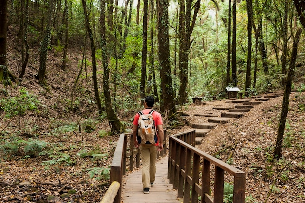 Hiker walking on wooden path in the forest