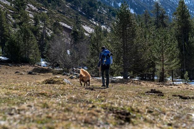 Hiker со своей собакой на горе в каталонских пиренеях.