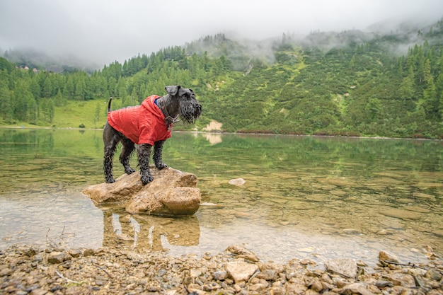 Hikers in the austrian alps walk on mountain hiking trails in the woods around the lakes whith black dog