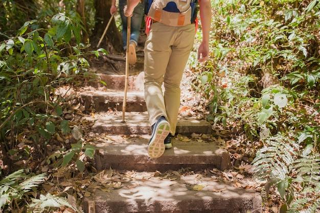 Escursionisti a piedi su per le scale nella giungla