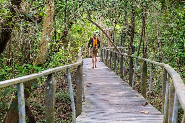 緑の熱帯ジャングル、コスタリカ、中央アメリカでのハイキング Premium写真