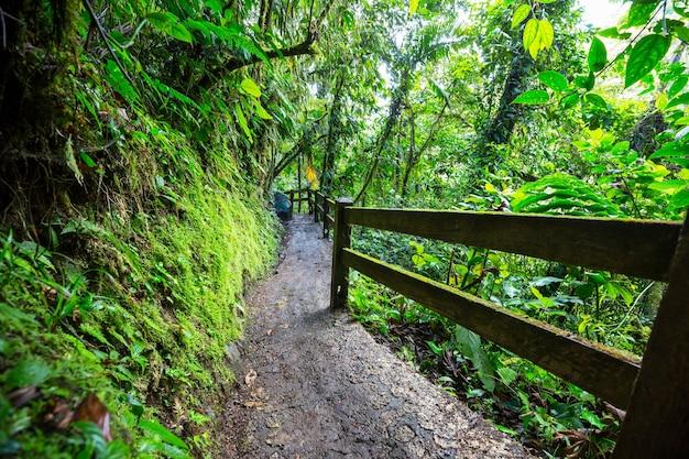 緑の熱帯ジャングル、コスタリカ、中央アメリカでのハイキング