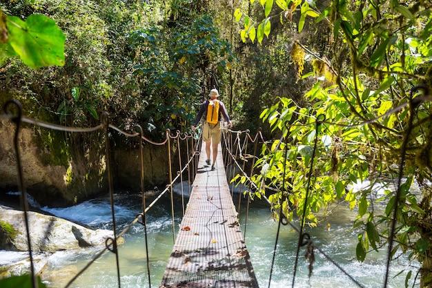 Поход в зеленые тропические джунгли, коста-рика, центральная америка