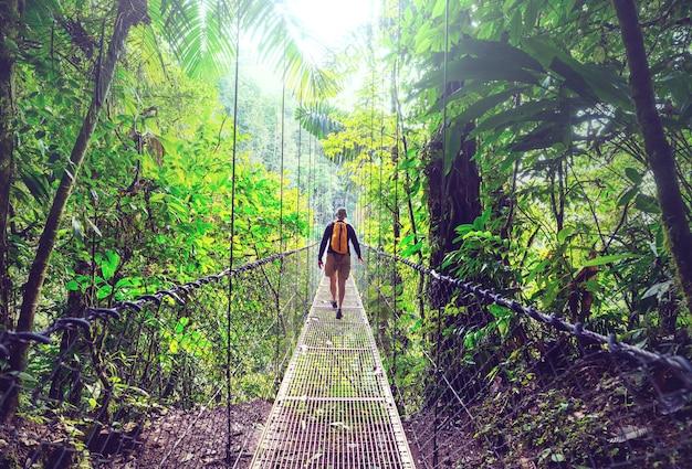 녹색 열대 정글, 코스타리카, 중앙 아메리카에서 하이킹