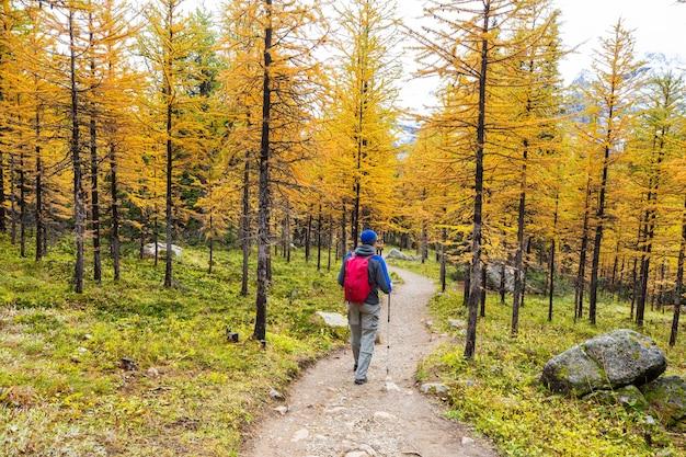カナダの山でハイキングをする人。ハイキングは、北米で人気のあるレクリエーション活動です。