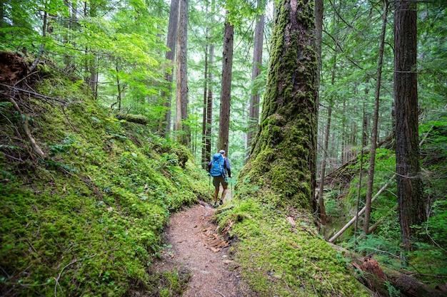 森の中でハイキングをする人