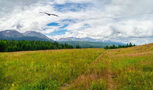 夏の山々を通るハイキングコース。トレッキング登山道。高地に草の小道がある大気のミニマリストの高山の風景。上り坂の経路。山腹を上る。