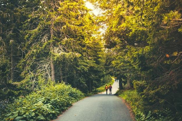 ゴージャスな間の美しい秋の森のアスファルト公園の道で手をつないで歩いているハイキングの人々