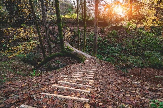 Походная тропа и деревянные лестницы с древовидного моста в осеннем лесу