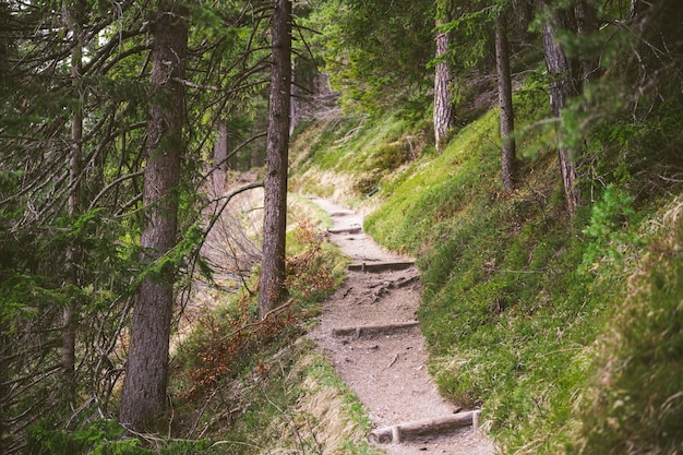 A hiking trail in the bavarian alps during spring