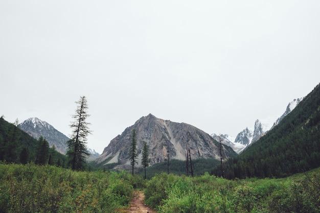 Тропа в горной местности на фоне величественных гигантских гор с ледниками. богатая горная растительность и лес. хвойные деревья. альпийский туризм. удивительный атмосферный ландшафт величественной природы.