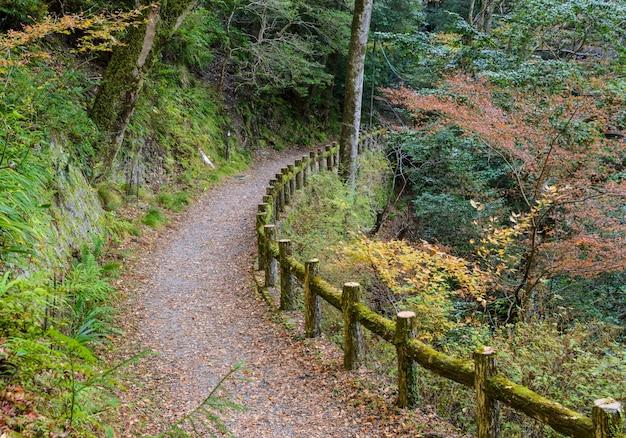 Hiking trail at minoo or minoh national park in autumn, osaka, japan