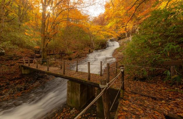 Hiking trail near a river in autumn