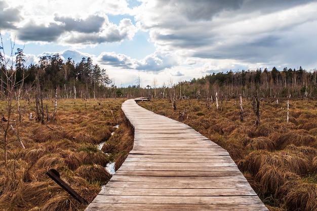Походная тропа на досках, идущая через болото в лесу.