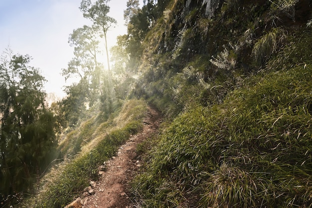 Hiking trails for hiker to mount rinjani summit