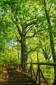 森の中の森の小道で木製の階段をハイキング。