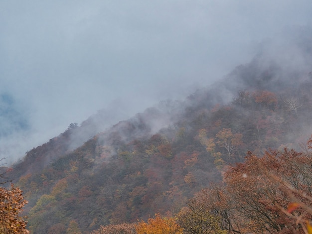Collina ricoperta di boschi ricoperti di nebbia con uno sfondo sfocato