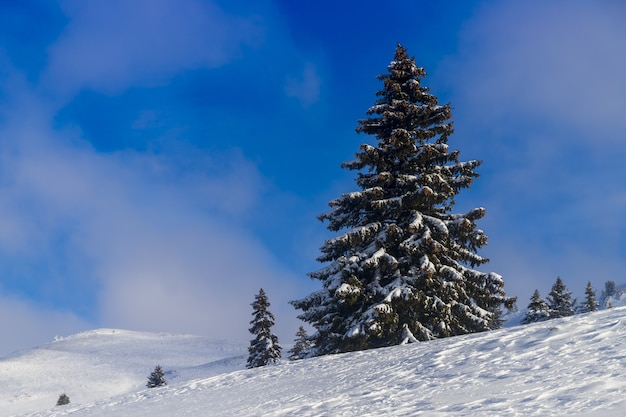 Hill covered in trees and snow under a blue sky and sunlight