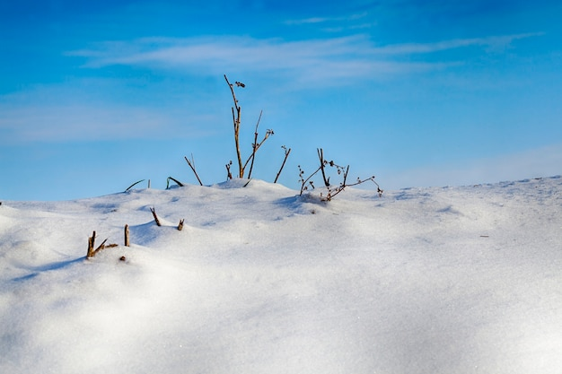 A hill covered with snow in winter, thin dry branches of grass grow on top against a blue sky, frost
