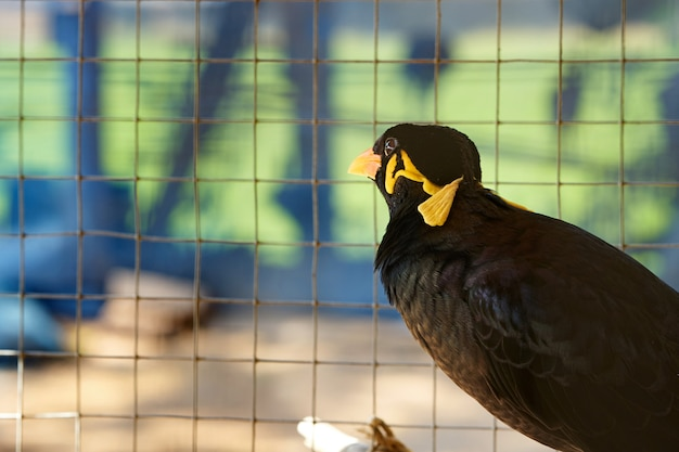Hill myna in cage in alone prison detain or confine or democracy