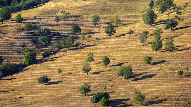 モルドバの珍しい木と放牧ヤギのある丘の斜面