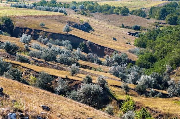 Pendio della collina con alberi rari e burroni, vegetazione lussureggiante nella gola in moldova
