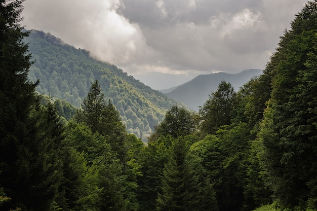 Hills covered with green trees with cloudy sky