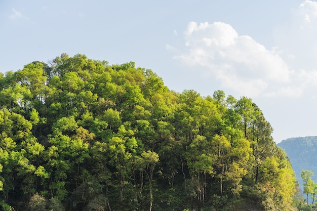 Hills of nepal, covered with jungle. landscape with tropical rainforest in bright summer day. reference image for cg drawing, matte painting. stock photo.