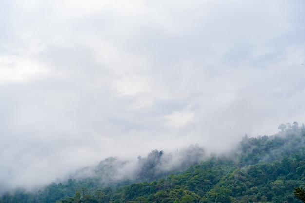 Hills with jungle in nepal, covered with fog. landscape with tropical rainforest. reference image for cg drawing, matte painting. stock photo.