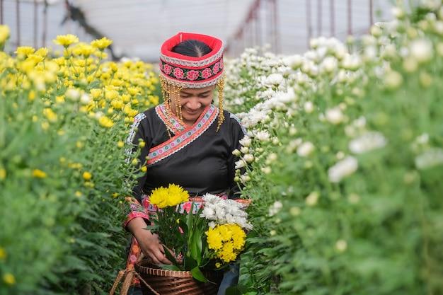 태국 북부의 고산족 여성이 정원에서 국화를 따기
