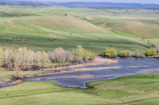 春の丘陵草原サラクタシュスキー地区のオレンブルク地方のロシアで撮影
