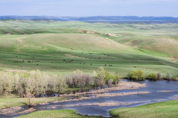 春の丘陵草原